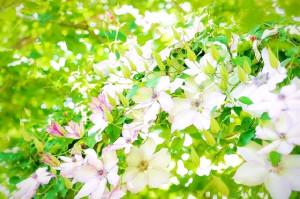 小さい花いっぱい