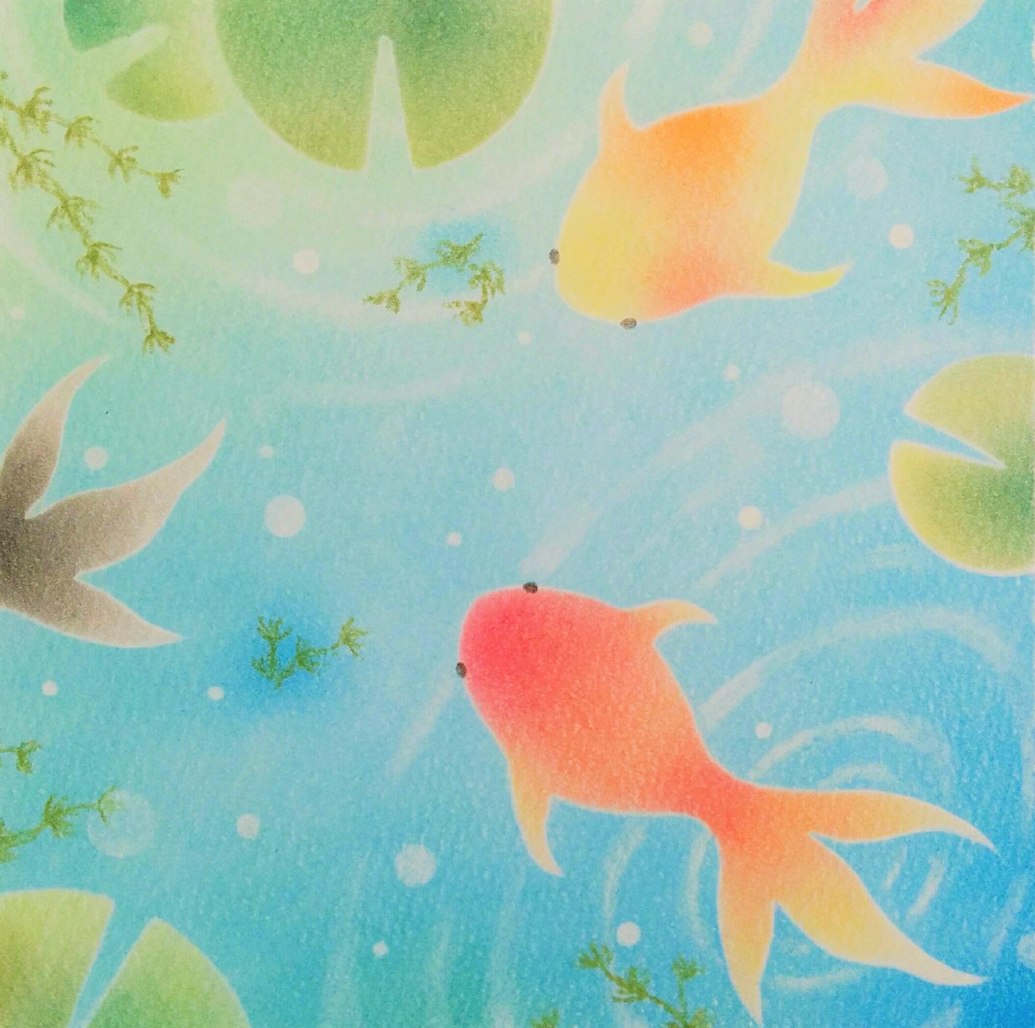 金魚  ★★★☆☆