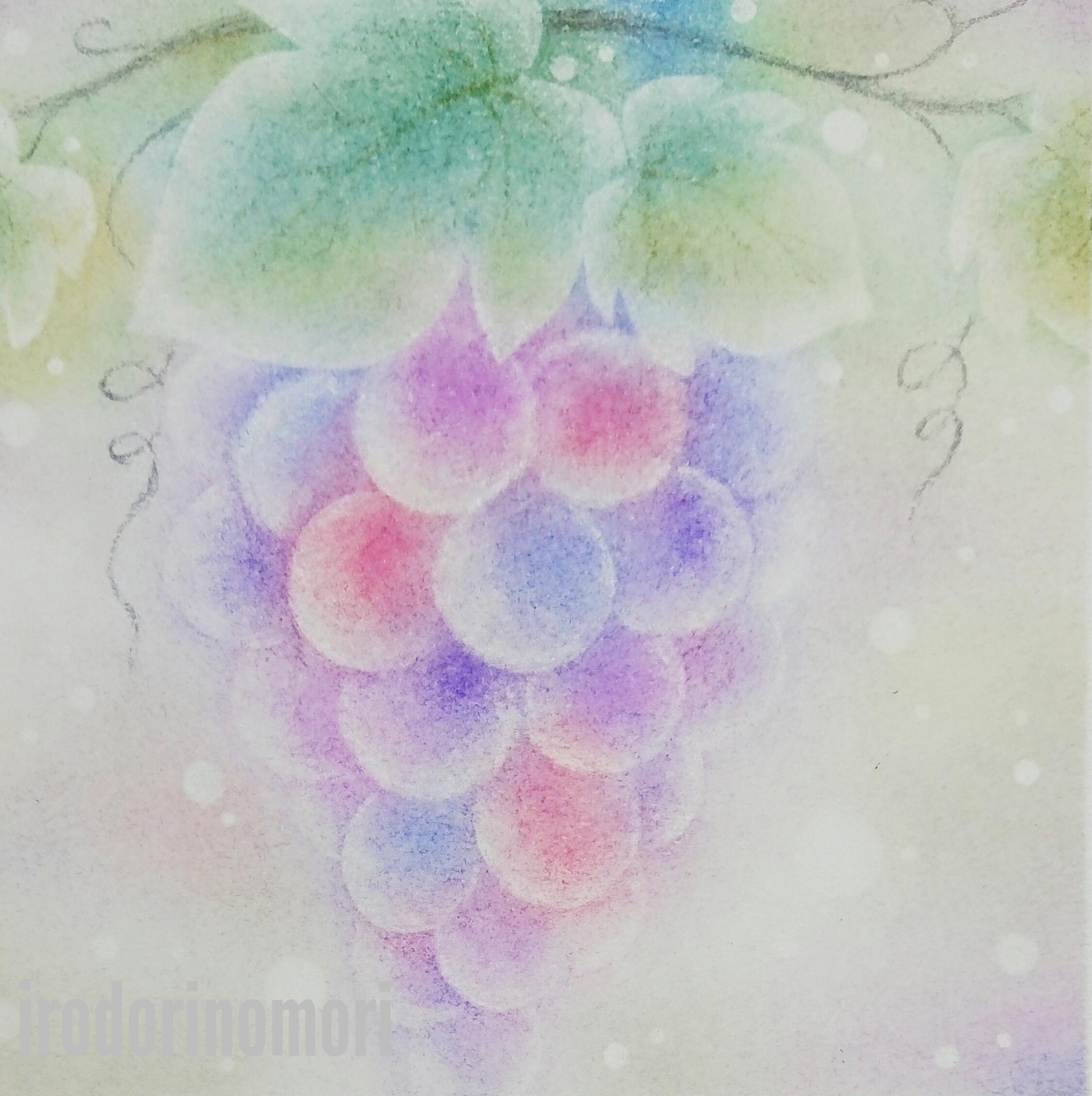 秋の葡萄 A